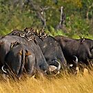 Oxpeckers' gathering by Konstantinos Arvanitopoulos