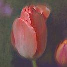Tulip by Jeff Burgess