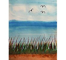Tall  grass along the waterfront, with birds, watercolor Photographic Print