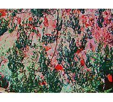 Oriental Brush Work Photographic Print