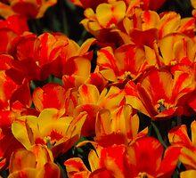 A Splash of Orange by John Schneider