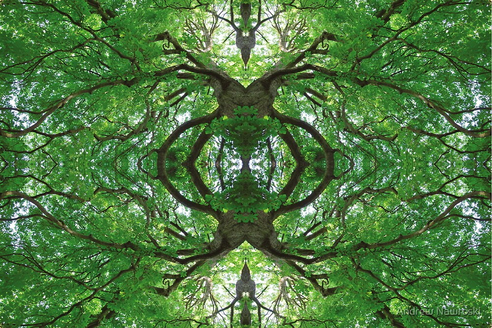 Creepy Tree. by Andrew Nawroski