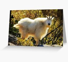 My first Mountain Goat  Greeting Card