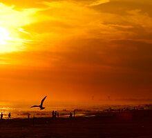 Sunset Flight by Scott Evers