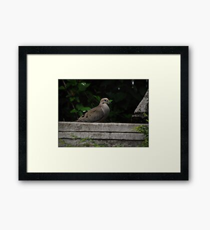 Fountain Visitor Framed Print