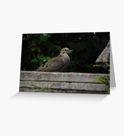 Fountain Visitor Greeting Card
