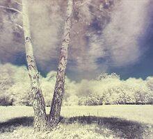 Silver Birch by Guy Carpenter