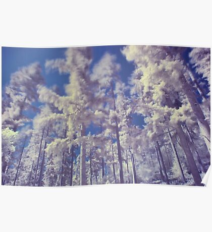 Coniferous Trees in Infra Red Poster