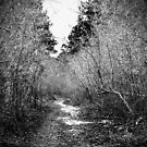 The Winding Forest Path by Ljartdesigns