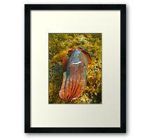 Giant Cuttlefish Blushing Framed Print
