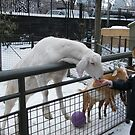 Childrens Zoo, Central Park, Snow View  by lenspiro