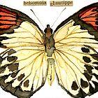 Great Orange Tip Butterfly [Hebomoia glaucippe] by Carol Kroll