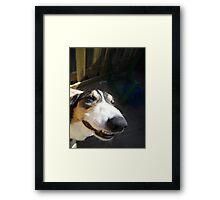 Dog Jokes Framed Print