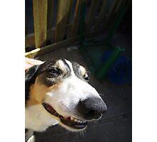 Dog Jokes Photographic Print