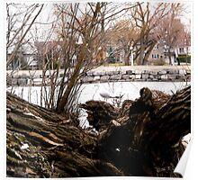 Seagull - Rideau River, Ottawa Poster