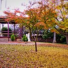 Yackandandah Autumn Series ~ The Rotunda by Jane Keats