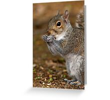 Gray Squirrel Portrait Greeting Card