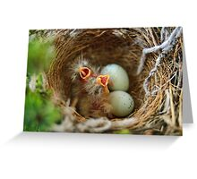 Hungry Hungry Finches Greeting Card