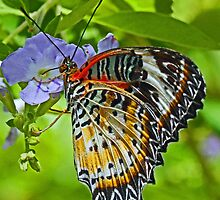 Colorful butterfly by jozi1