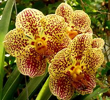 Two Orchid Two by Mary Kaderabek-Aleckson