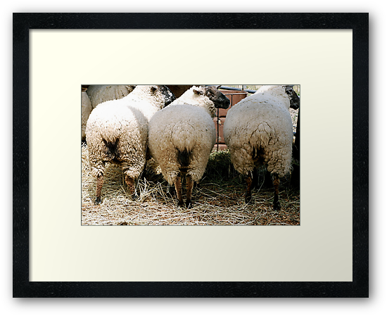 Once upon a time there were 3 little sheep.... by Jabelico