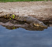 thorny reflection by Les Pink
