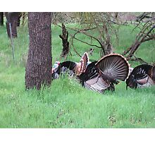 Turkey Convention Photographic Print