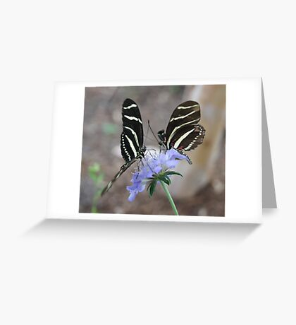 Zebra Longwing Butterflies... Greeting Card