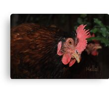 International Respect for Chickens day - May 4th Canvas Print