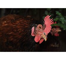 International Respect for Chickens day - May 4th Photographic Print