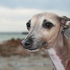Italian Greyhound by RainbowsEnd