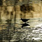 Shore Bird at Golden Twighlight by Robin Clifton