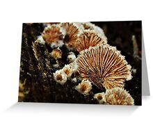 Shells or Shrooms? Greeting Card