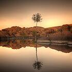 Rock Cove Tree by Bob Larson