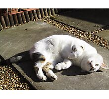 Mad Cats and Englishmen(go out in the midday sun) Photographic Print