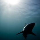 Shark Silhouette by paulcowell
