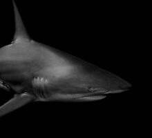 shark in the shadows by paulcowell