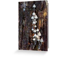 Fungus in the forest 8 Greeting Card