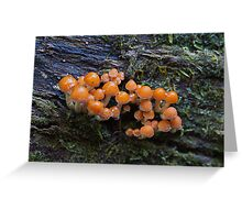 Fungus in the forest 11 Greeting Card