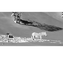 white horse in the snow Photographic Print