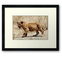 African Lion Cub After Feeding, Serengeti, Tanzania  Framed Print