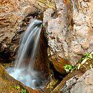 Zebedee Springs by Karina  Cooper