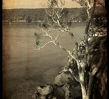 Lilli Pilli Point by iPhoneographyli