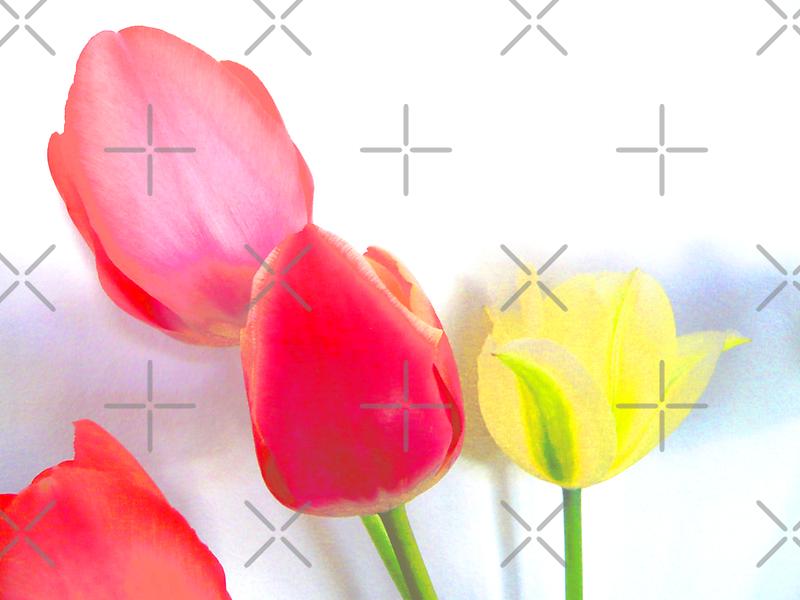 Naked Tulips by HeklaHekla