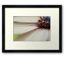 Cap daisy Framed Print