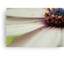 Cap daisy Canvas Print