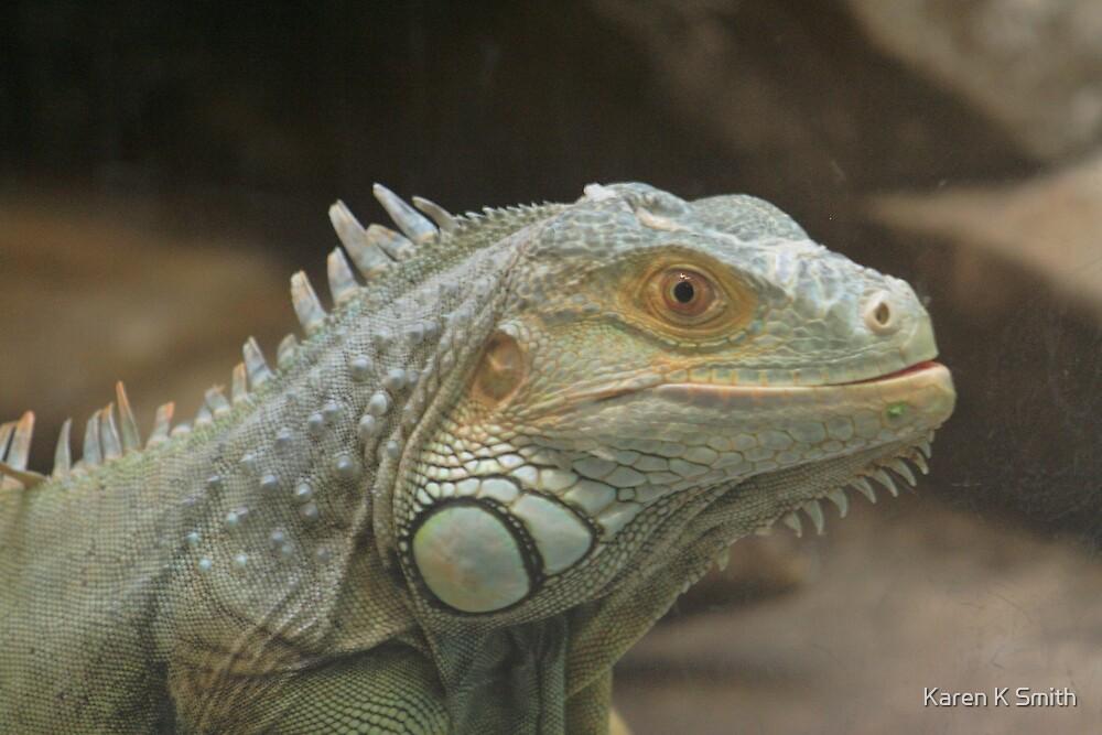 Iguana Portrait by Karen K Smith