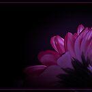 Petals In The Spotlight by Aj Finan