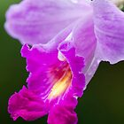 Close-up of a Dendrobium Orchid by Sudesh Pingamage