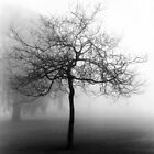 The fog.... by Sue Ratcliffe